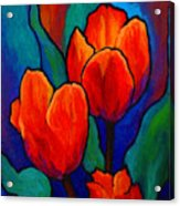 Tulip Trio Acrylic Print by Marion Rose