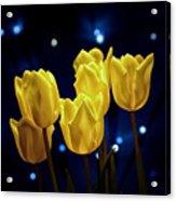Tulip Twinkle Acrylic Print