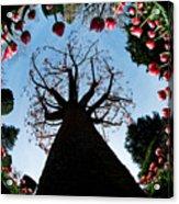 Tulip Wonderland L550 Acrylic Print