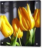 Tulipfest 2 Acrylic Print