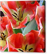 Tulips - Competing For Attention Acrylic Print