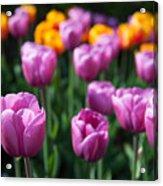 Tulips 14 Acrylic Print