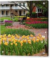 Tulips Abound Acrylic Print