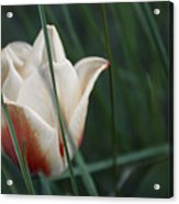 Tulips And Bluebells Acrylic Print