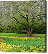 Tulips And Cherry Blossom 2 Acrylic Print
