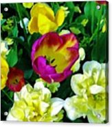 Tulips And Flowers  Acrylic Print
