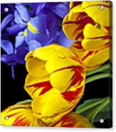 Tulips And Iris Acrylic Print