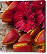 Tulips And Red Daisies  Acrylic Print