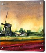 Tulips And Windmill From The Netherlands Acrylic Print