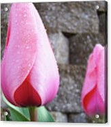 Tulips Artwork Flowers 26 Pink Tulip Flowers Art Prints Nature Floral Art Acrylic Print
