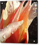 Tulips Artwork Flowers Floral Art Prints Spring Peach Tulip Flower Macro Acrylic Print