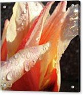 Tulips Artwork Flowers Floral Art Prints Spring Peach Tulip Flower Macro Acrylic Print