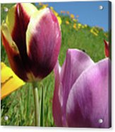 Tulips Artwork Tulip Flowers Spring Meadow Nature Art Prints Acrylic Print