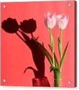 Tulips Casting Shadows Acrylic Print