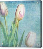 Tulips Day Acrylic Print