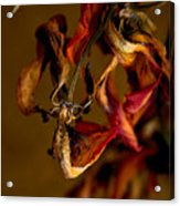 Tulip's Demise - A Natural Abstract Acrylic Print