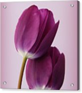 Tulips Acrylic Print by Diane Reed