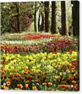 Tulips Everywhere 1 Acrylic Print