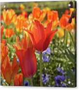 Tulips Everywhere 3 Acrylic Print