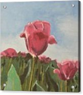 Tulips Festival Ottawa Acrylic Print