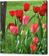 Tulips Flowers Art Prints Spring Tulip Flower Artwork Nature Art Acrylic Print