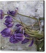 Tulips Frozen Acrylic Print
