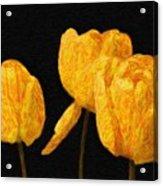 Tulips - Id 16235-220512-0422 Acrylic Print