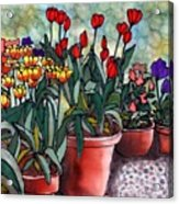 Tulips In Clay Pots Acrylic Print by Linda Marcille