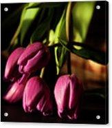Tulips In Evening Sunlight Acrylic Print
