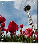 Tulips In Seattle H081 Acrylic Print