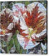 Tulips In Springtime Photomosaic Acrylic Print