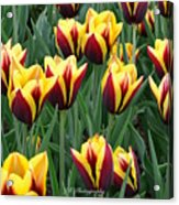 Tulips In The Garden Acrylic Print