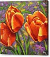 Tulips In The Sun Acrylic Print