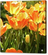Tulips In The Sunlight Acrylic Print