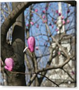 Tulips On Trees  Acrylic Print