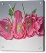 Tulips On White Acrylic Print