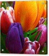 Tulips Smiling Acrylic Print