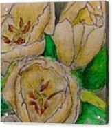 Tulips Trio Acrylic Print