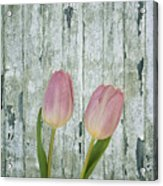 Tulips Two Acrylic Print