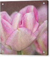 Tulips With Texture Acrylic Print