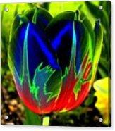 Tulipshow Acrylic Print