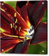 Tullflower Acrylic Print