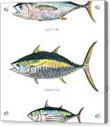 Tuna Fishes Acrylic Print