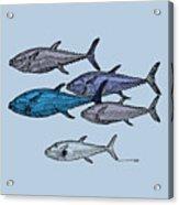 Tuna School Of Fish Acrylic Print