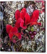 Tundra Acrylic Print