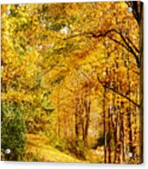 Tunnel Of Gold Acrylic Print