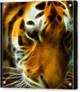 Turbulent Tiger Acrylic Print by Ricky Barnard