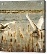 Turf Wars Acrylic Print