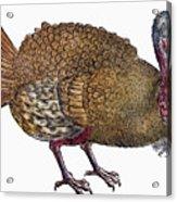 Turkey, 1560 Acrylic Print