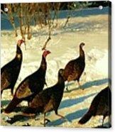 Turkey Call Acrylic Print